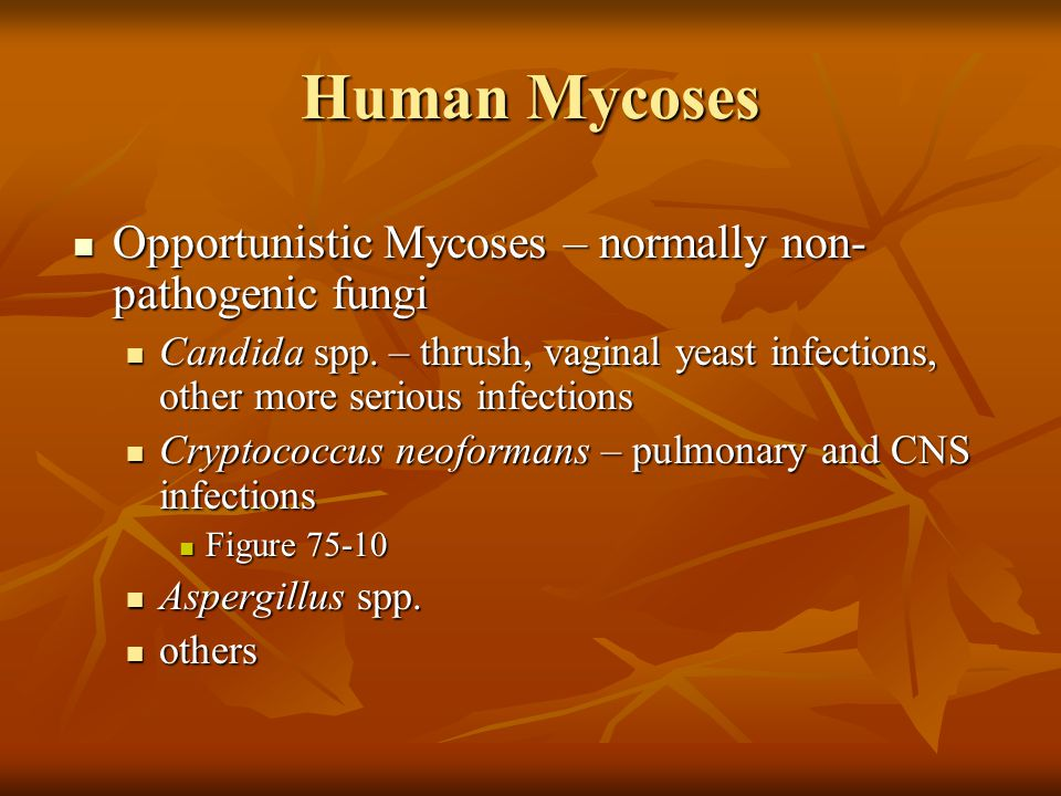 Human Mycoses Opportunistic Mycoses – normally non-pathogenic fungi