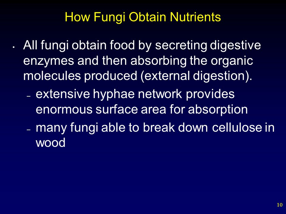 How Fungi Obtain Nutrients