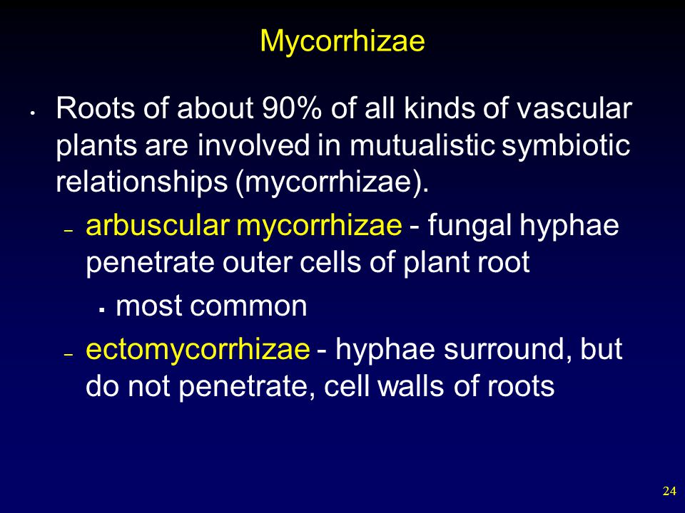 Mycorrhizae Roots of about 90% of all kinds of vascular plants are involved in mutualistic symbiotic relationships (mycorrhizae).