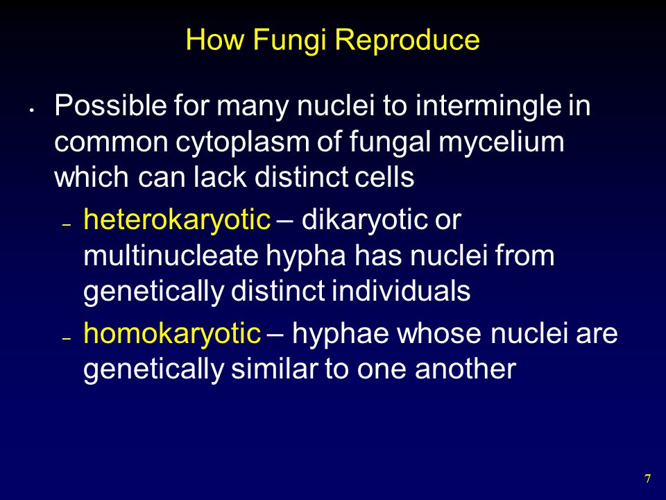 How Fungi Reproduce Possible for many nuclei to intermingle in common cytoplasm of fungal mycelium which can lack distinct cells.