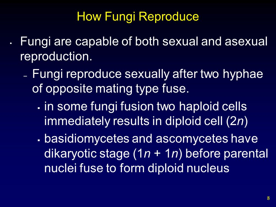 How Fungi Reproduce Fungi are capable of both sexual and asexual reproduction.
