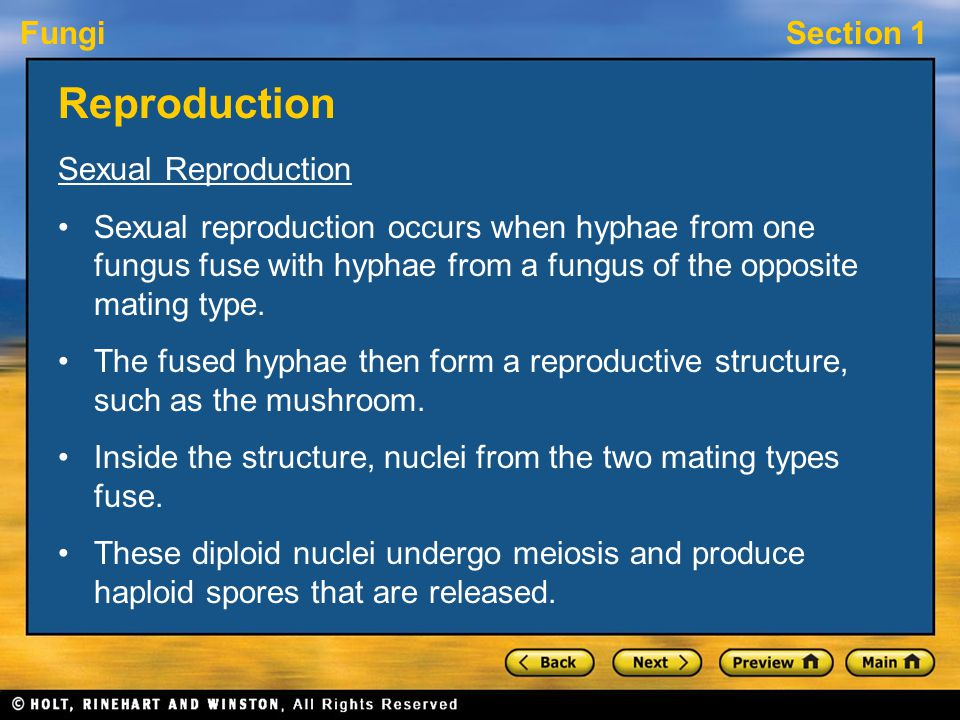 Reproduction Sexual Reproduction