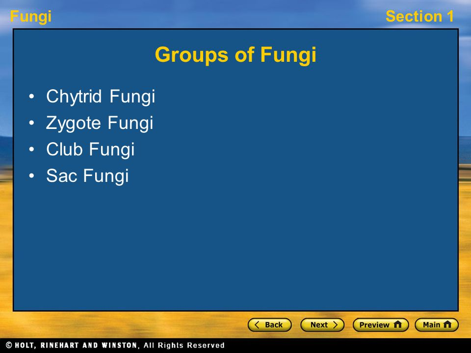 Groups of Fungi Chytrid Fungi Zygote Fungi Club Fungi Sac Fungi