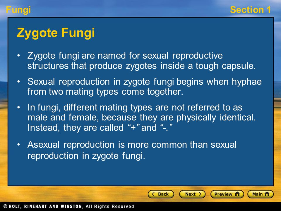 Zygote Fungi Zygote fungi are named for sexual reproductive structures that produce zygotes inside a tough capsule.