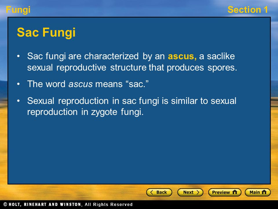 Sac Fungi Sac fungi are characterized by an ascus, a saclike sexual reproductive structure that produces spores.