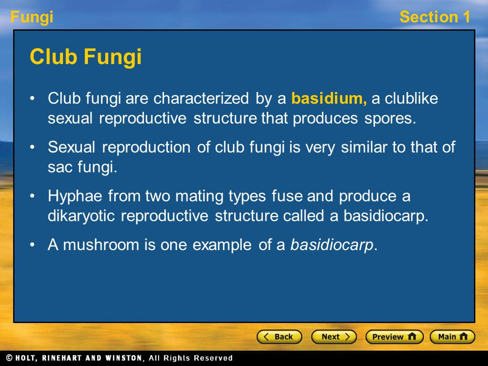 Club Fungi Club fungi are characterized by a basidium, a clublike sexual reproductive structure that produces spores.