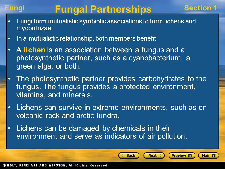 Fungal Partnerships Fungi form mutualistic symbiotic associations to form lichens and mycorrhizae.