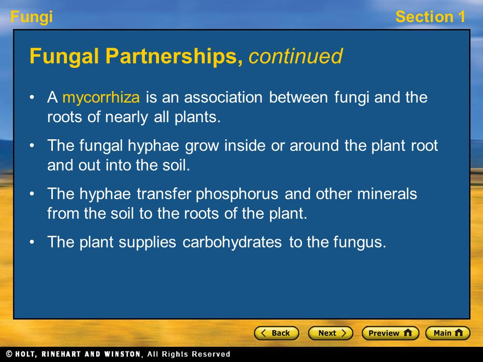 Fungal Partnerships, continued