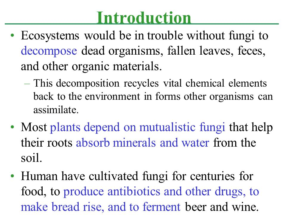 Introduction Ecosystems would be in trouble without fungi to decompose dead organisms, fallen leaves, feces, and other organic materials.