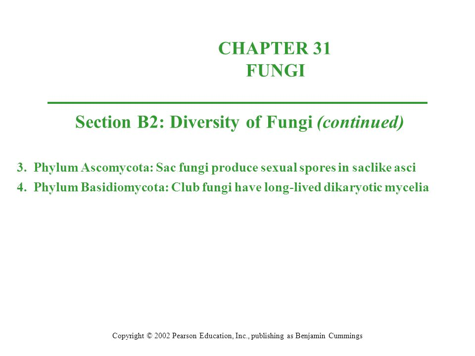 Section B2: Diversity of Fungi (continued)