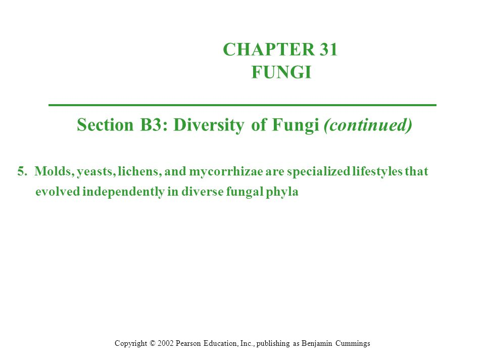 Section B3: Diversity of Fungi (continued)