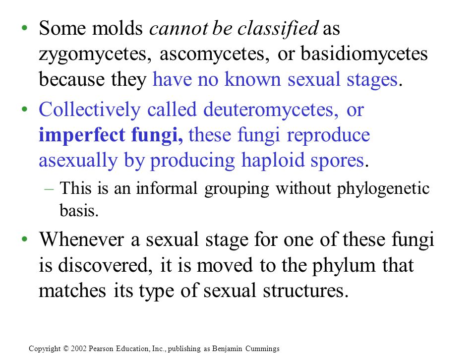 Some molds cannot be classified as zygomycetes, ascomycetes, or basidiomycetes because they have no known sexual stages.