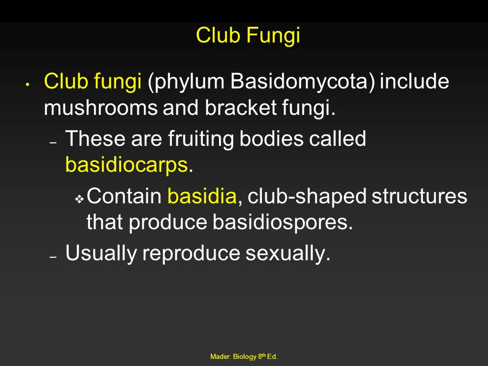 Club fungi (phylum Basidomycota) include mushrooms and bracket fungi.