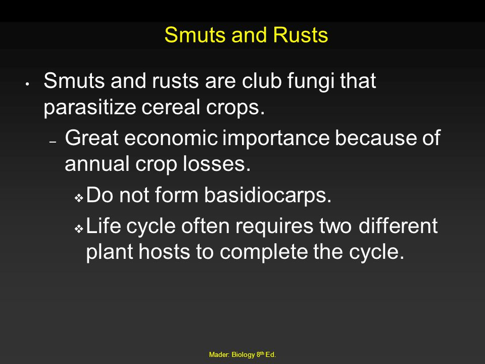 Smuts and rusts are club fungi that parasitize cereal crops.