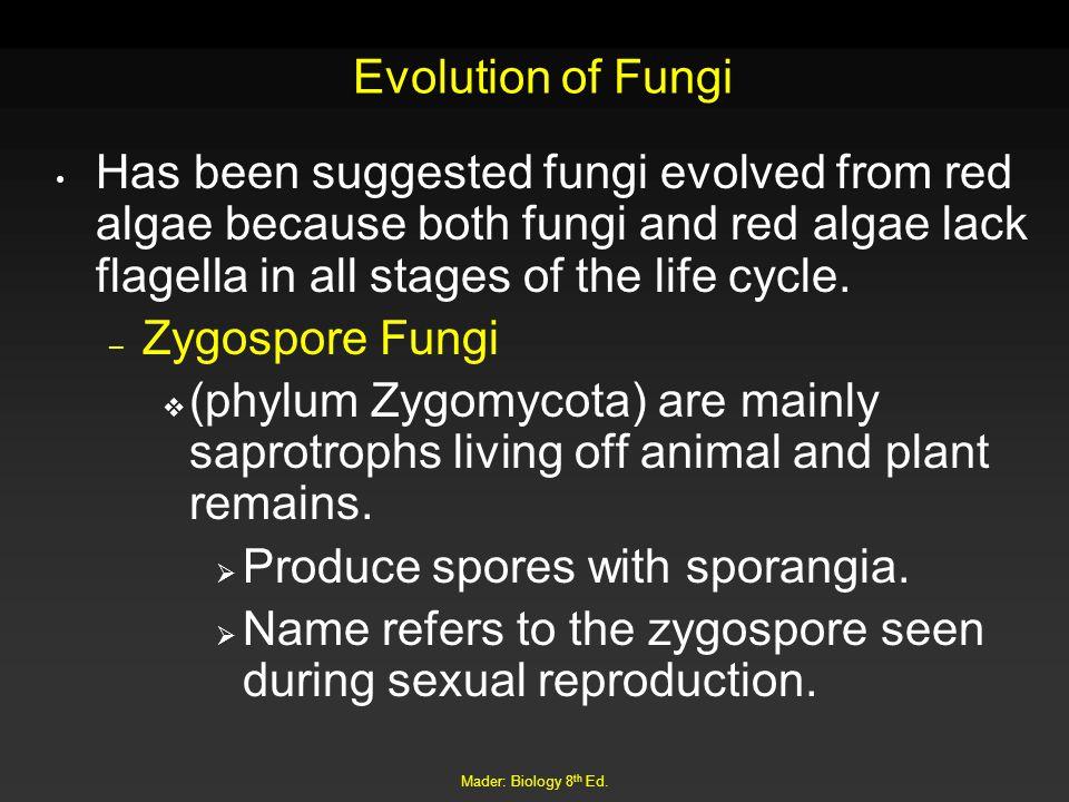 Produce spores with sporangia.