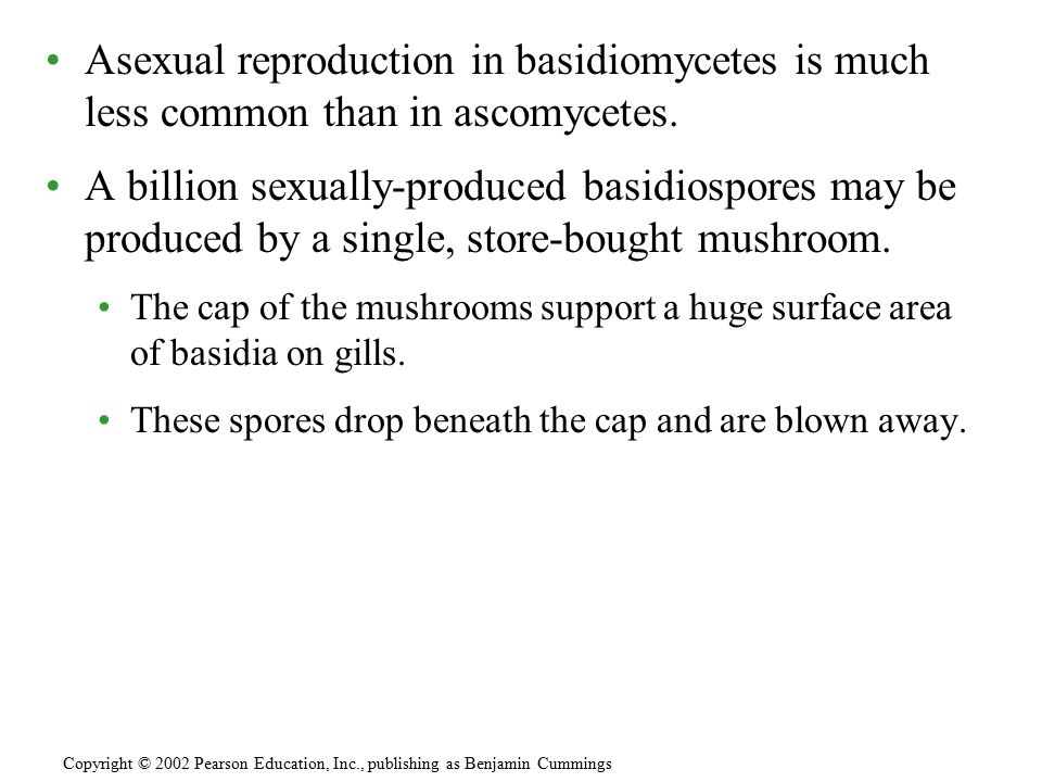 Asexual reproduction in basidiomycetes is much less common than in ascomycetes.