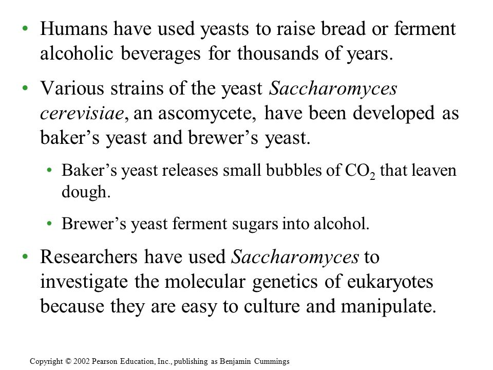 Humans have used yeasts to raise bread or ferment alcoholic beverages for thousands of years.