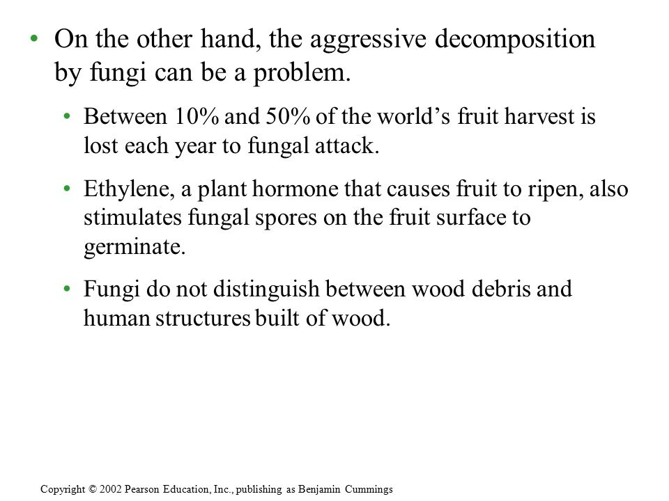On the other hand, the aggressive decomposition by fungi can be a problem.