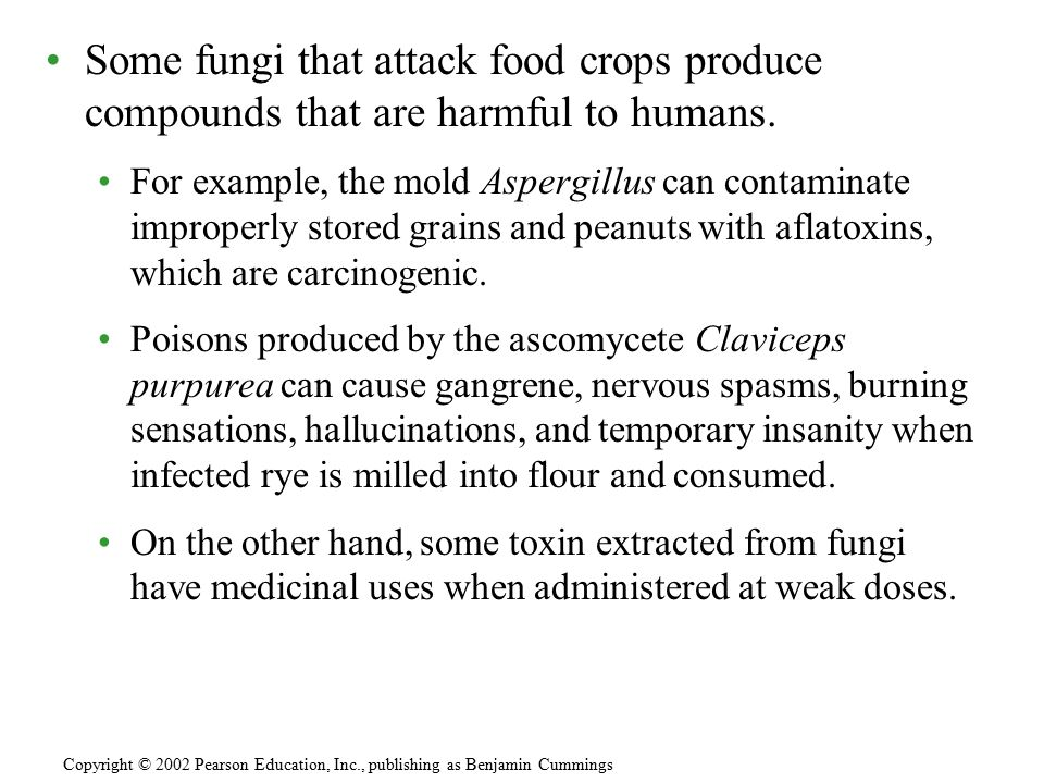 Some fungi that attack food crops produce compounds that are harmful to humans.