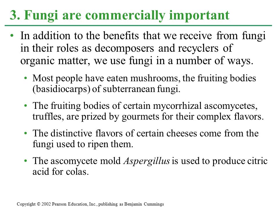3. Fungi are commercially important