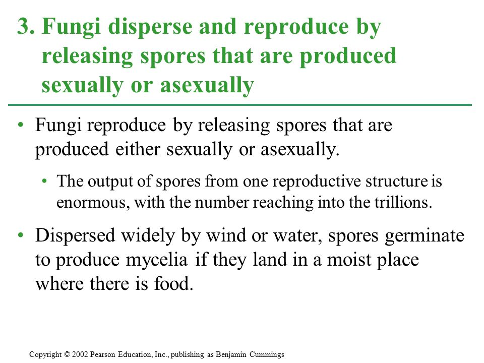 3. Fungi disperse and reproduce by releasing spores that are produced sexually or asexually