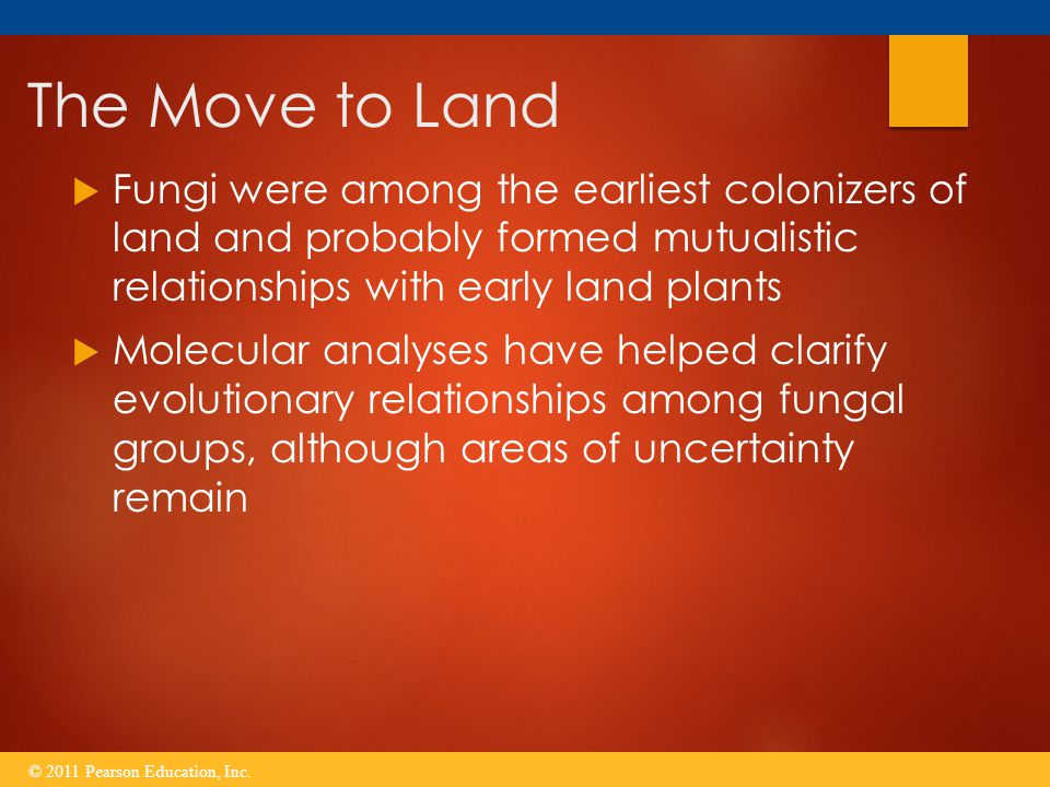 The Move to Land Fungi were among the earliest colonizers of land and probably formed mutualistic relationships with early land plants.