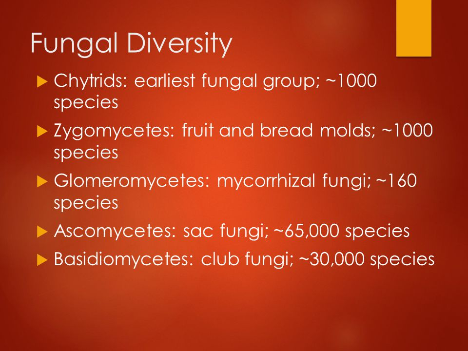 Fungal Diversity Chytrids: earliest fungal group; ~1000 species
