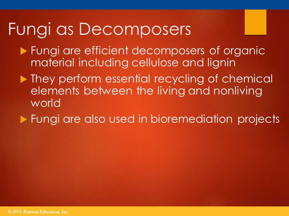Fungi as Decomposers Fungi are efficient decomposers of organic material including cellulose and lignin.