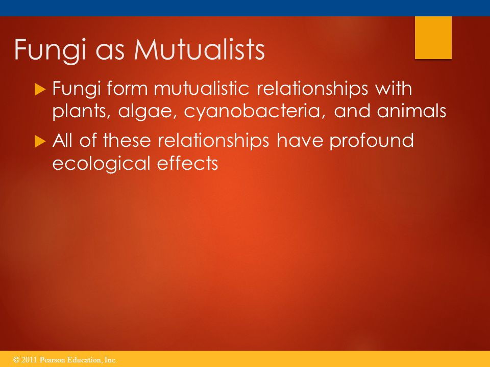 Fungi as Mutualists Fungi form mutualistic relationships with plants, algae, cyanobacteria, and animals.