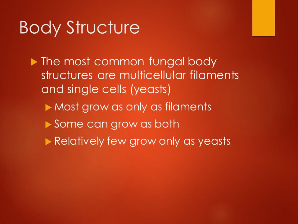 Body Structure The most common fungal body structures are multicellular filaments and single cells (yeasts)