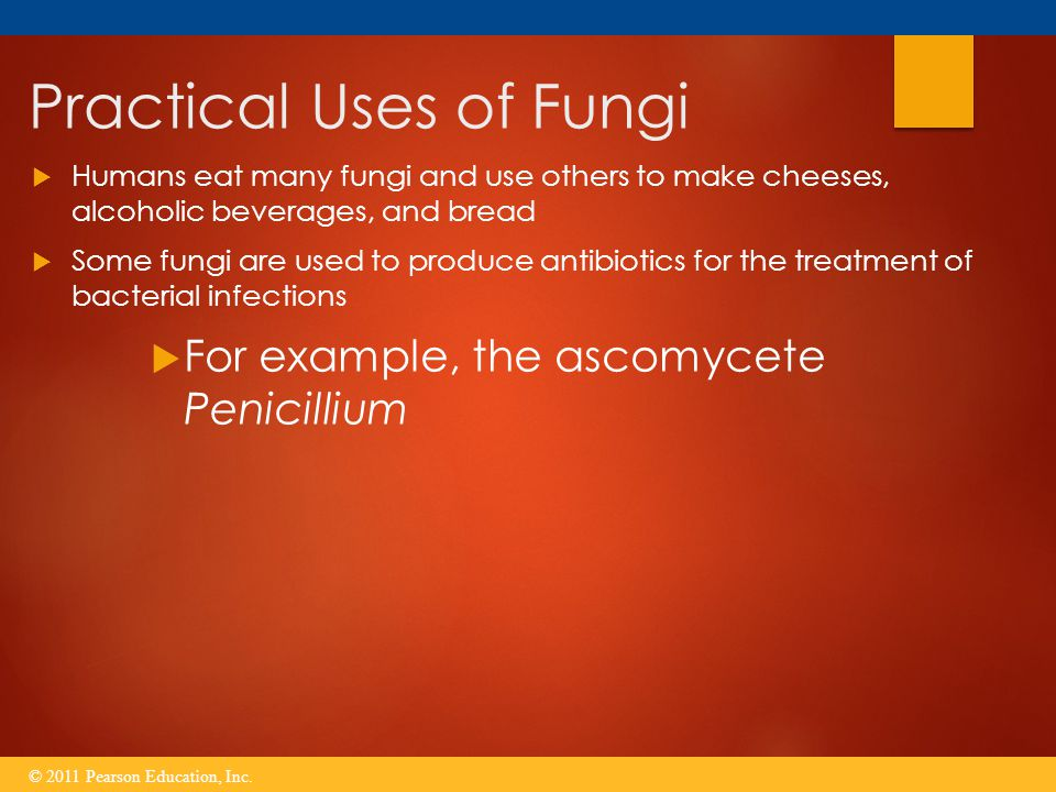 Practical Uses of Fungi