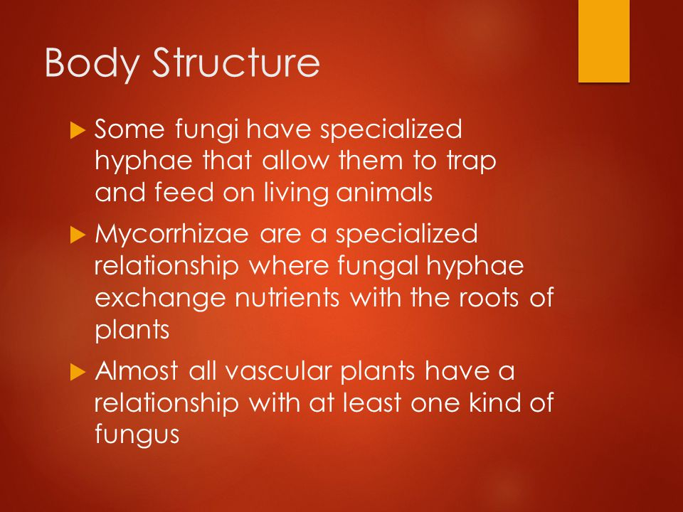 Body Structure Some fungi have specialized hyphae that allow them to trap and feed on living animals.