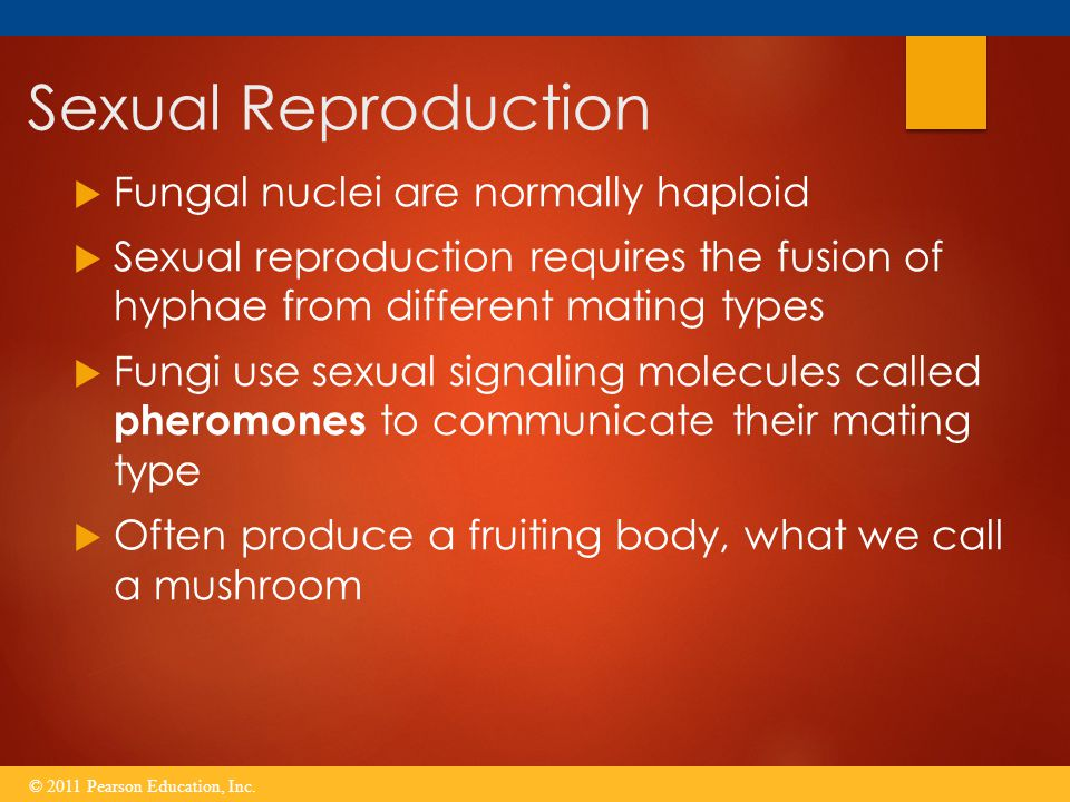 Sexual Reproduction Fungal nuclei are normally haploid
