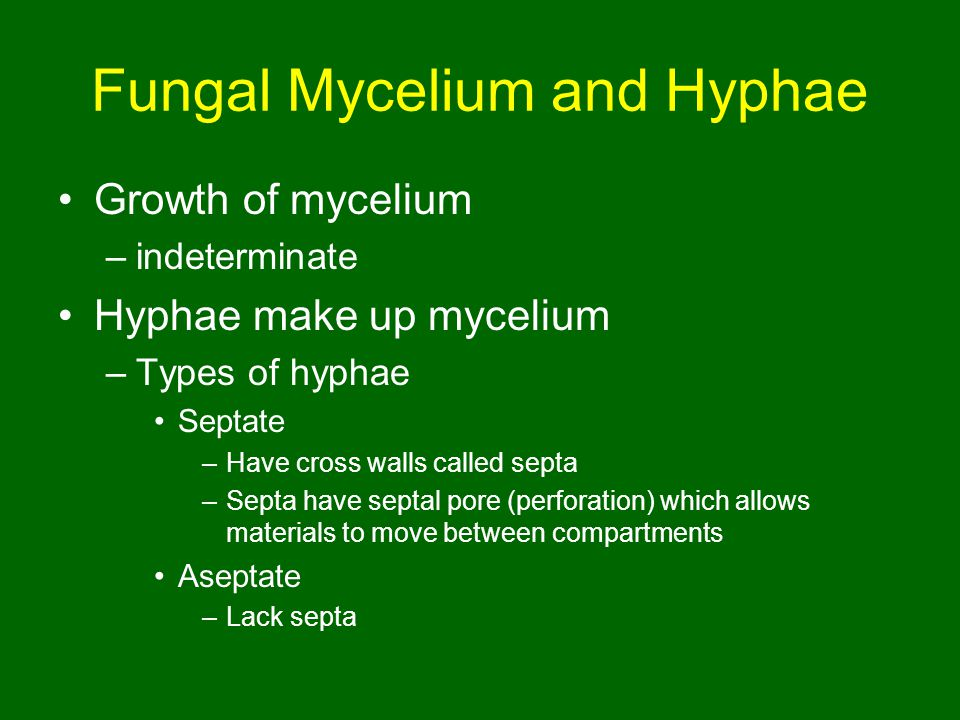 Fungal Mycelium and Hyphae