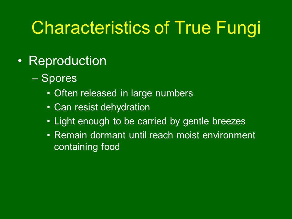 Characteristics of True Fungi