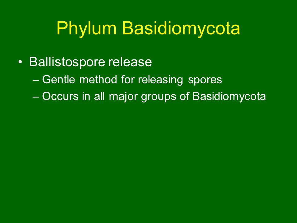 Phylum Basidiomycota Ballistospore release