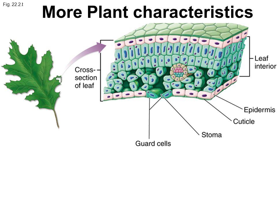 More Plant characteristics
