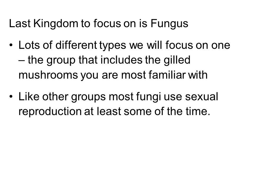 Last Kingdom to focus on is Fungus