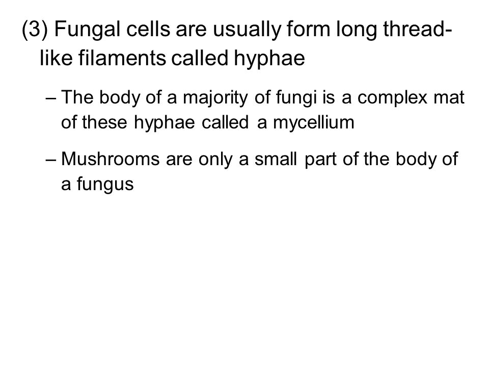 (3) Fungal cells are usually form long thread-like filaments called hyphae