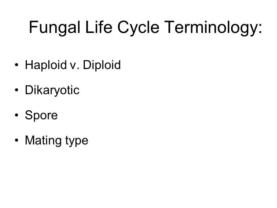 Fungal Life Cycle Terminology: