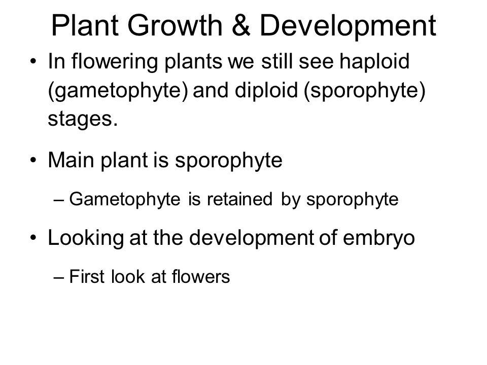 Plant Growth & Development