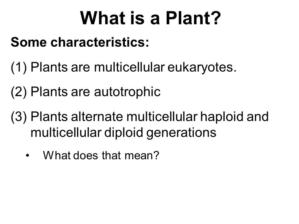 What is a Plant Some characteristics: