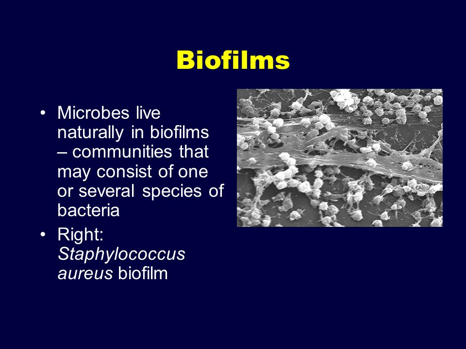 Biofilms Microbes live naturally in biofilms – communities that may consist of one or several species of bacteria.