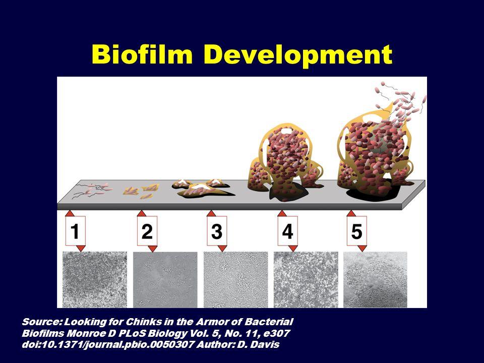 Biofilm Development