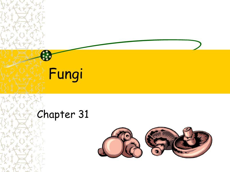 Fungi Chapter 31