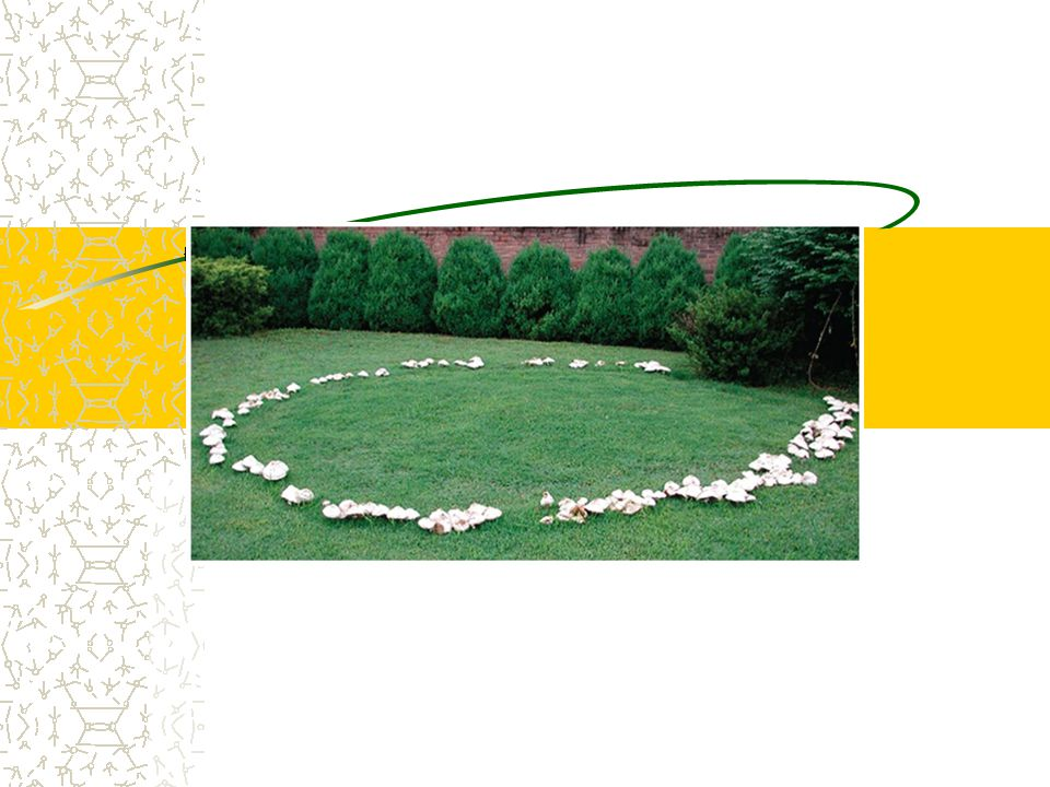 Figure 31.19 A fairy ring