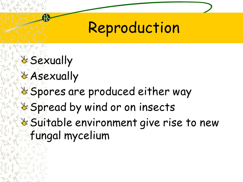 Reproduction Sexually Asexually Spores are produced either way