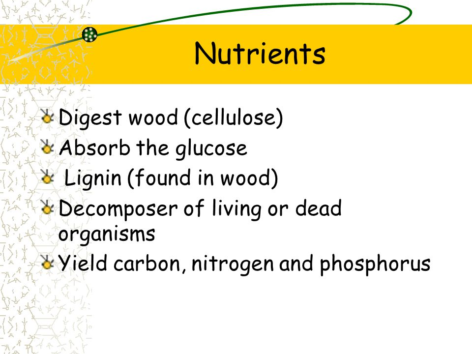 Nutrients Digest wood (cellulose) Absorb the glucose