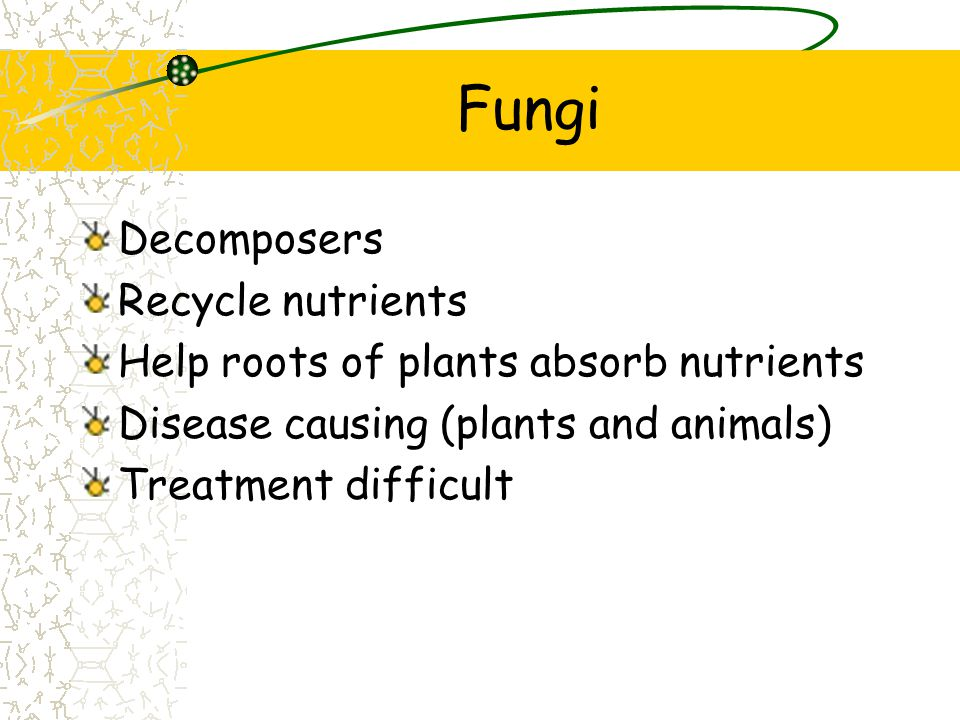 Fungi Decomposers Recycle nutrients