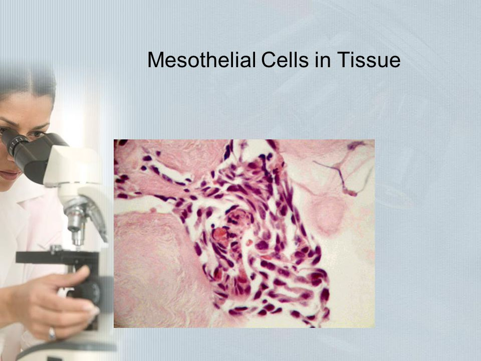 Mesothelial Cells in Tissue